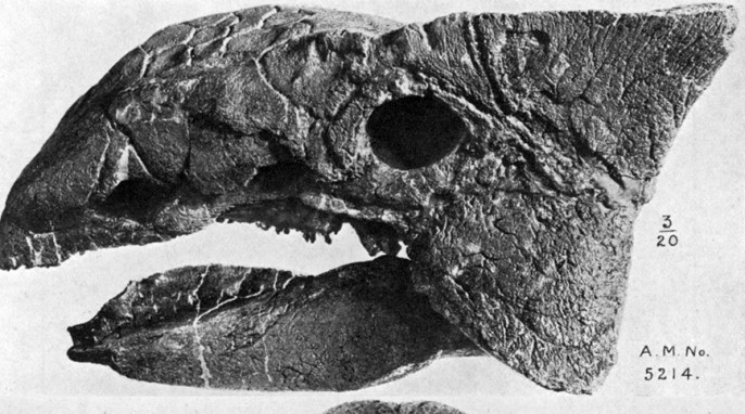 EH Science: Ankylosaurus_skull, By William Diller Matthew (1871-1930)