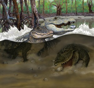 Prehistoric Crocodile: Artist's rendition of Amazonian swamps from the Miocene era (about 13 million years ago) and the three new species of crocodiles uncovered in northeastern Peru: Kuttanacaiman iquitosensis (left), Caiman wannlangstoni (right), and Gnatusuchus pebasensis (bottom). (© Javier Herbozo)