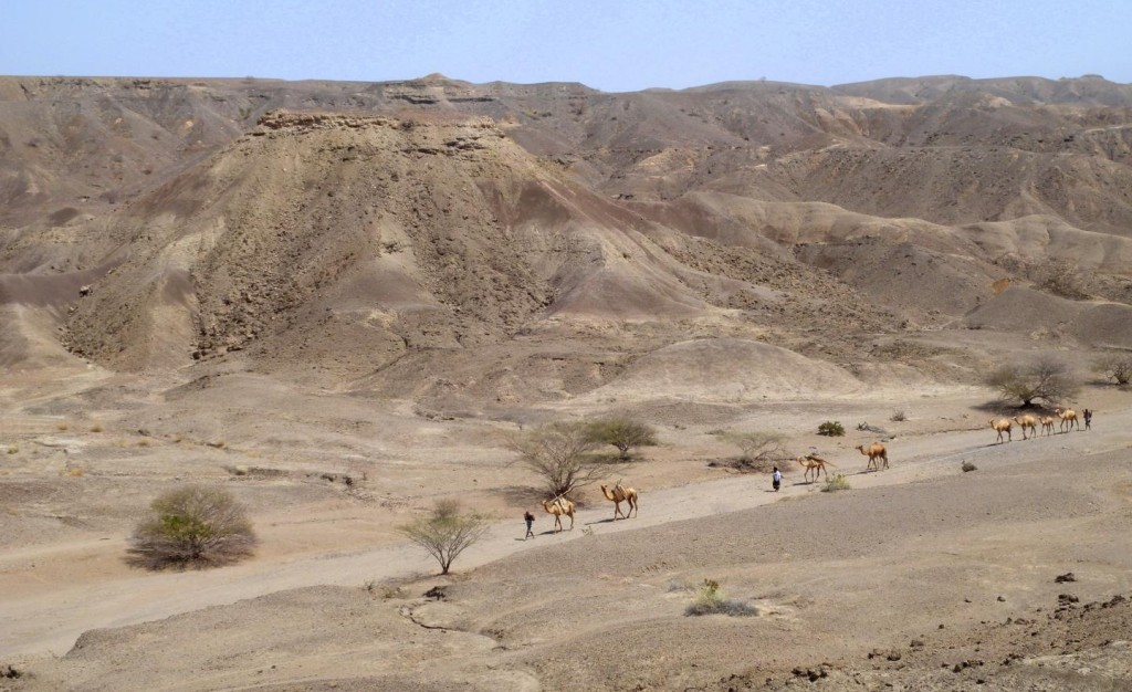 Human evolution: A caravan moves through the Ledi-Geraru research area (Erin DiMaggio)