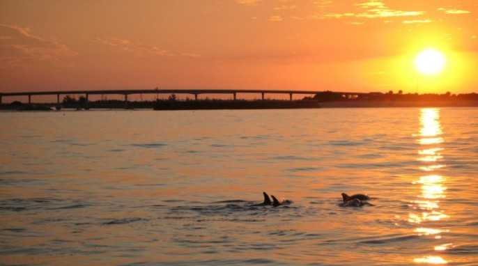 Dolphins at sunset along the Indian River Lagoon (Photo courtesy of Harbor Branch Oceanographic Institute, Florida Atlantic University)