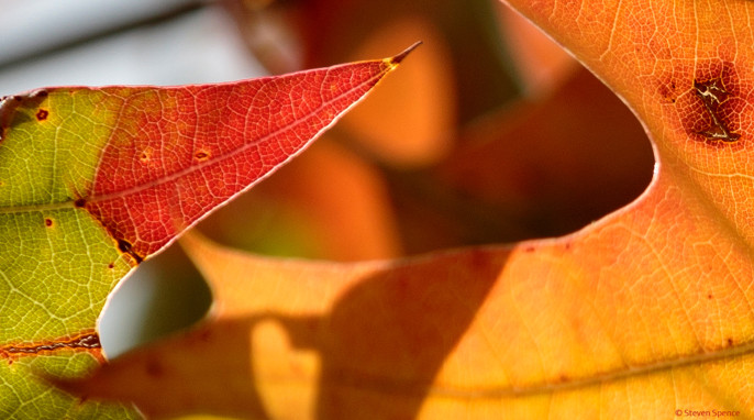 Autumn Leaves: Fall colors on Earth could be the norm on a planet orbiting an F-class star