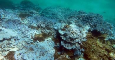 Global Coral Bleaching Event, NOAA