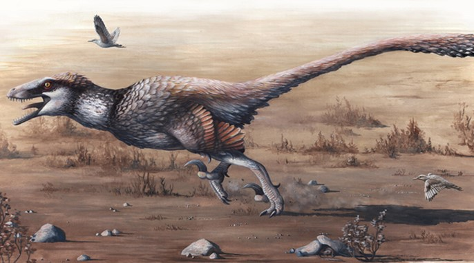 Dakotaraptor steini. Hell Creek Formation. 66 Ma. Artwork by Emily Willoughby