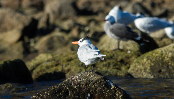Seabird watching in Baja California