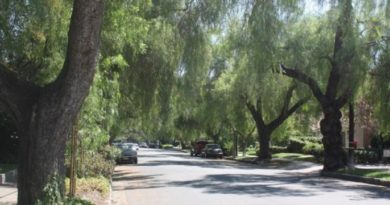 Street Trees in California Valued at $1 Billion