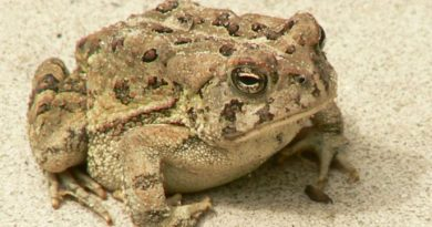 Tracking Climate Change Through Hibernating Toads
