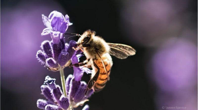 Tips for a Bee Friendly Garden