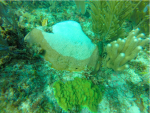 How Can Caribbean Corals Cope with Climate Change?